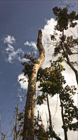 tree housing.JPG